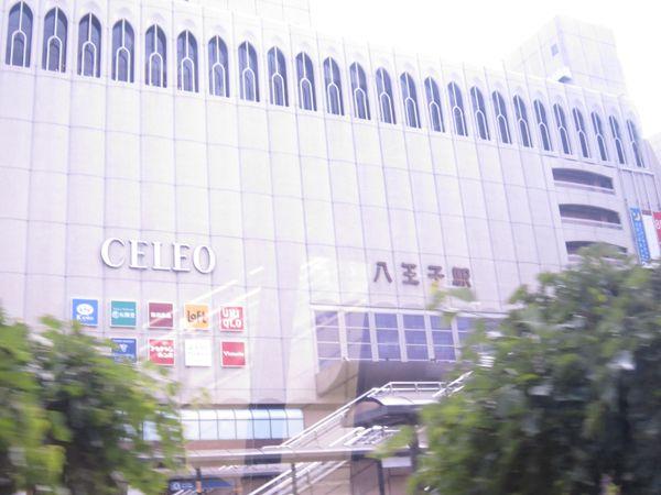 平成25年5月19日薫風櫻花塾八王子支部発足一周年運動